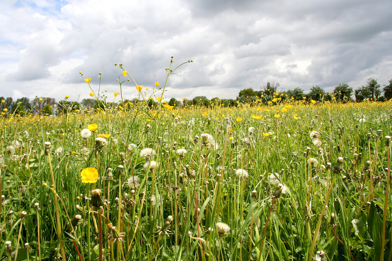 Meadow before a Thunderstorm royalty free stock image