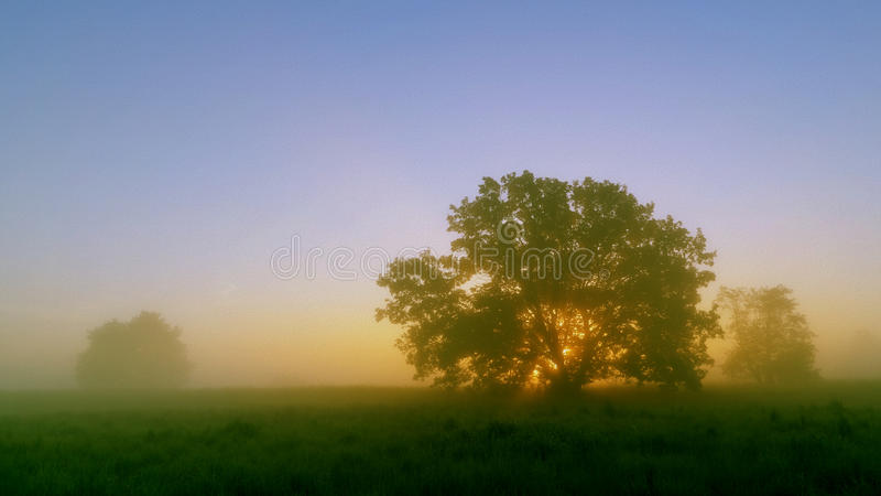 Meadow, tree and rising sun stock image