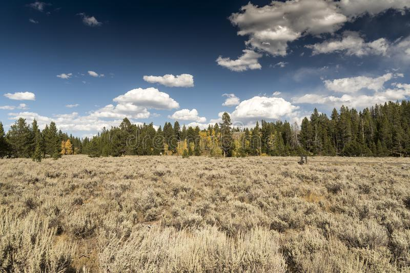 Meadow and trees at the Chapel of the Transfiguration Moose Tetons National Park Wyoming stock photos
