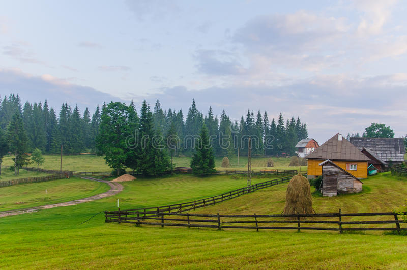 Meadow with trees royalty free stock photo