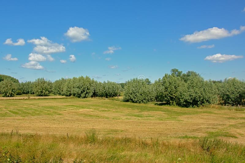 Meadow with trees under a clear blue sky in Kalkense Meersen nature reserve, Flanders, Belgium. Part of the Sigmaplan which protects Flanders from flooding. In royalty free stock image