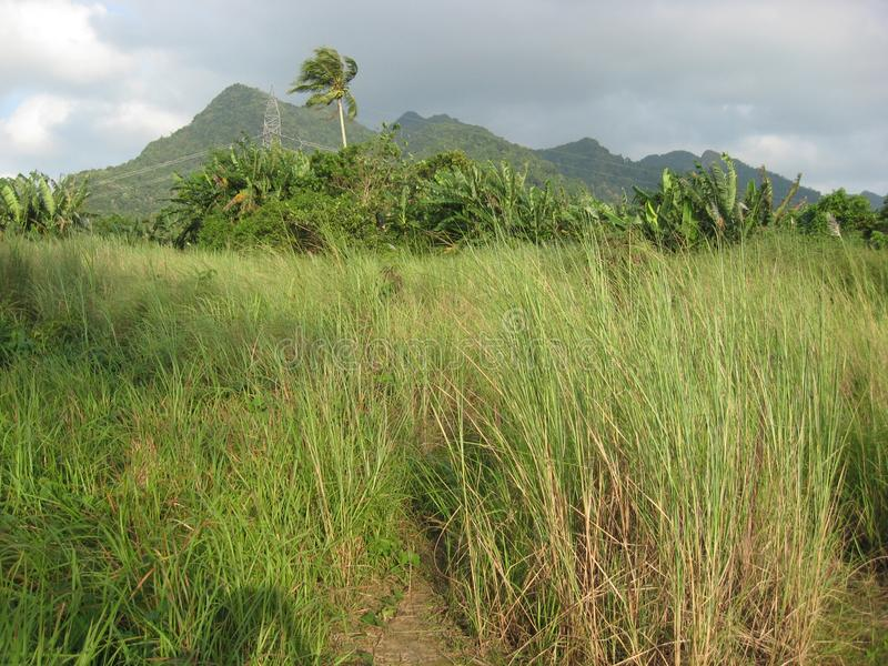 A meadow and tropical trees near San Isidro, Lipa city, Philippines. A meadow and palm and banana trees on the mountain near San Isidro, Lipa city, Luzon stock images
