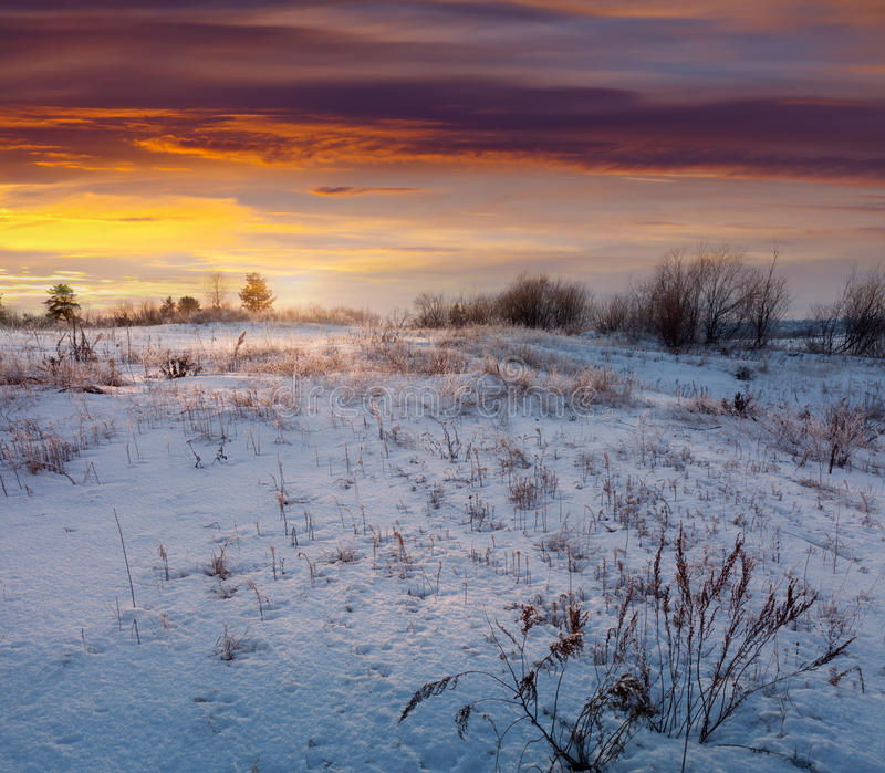 Meadow under snow in wintry morning royalty free stock photography