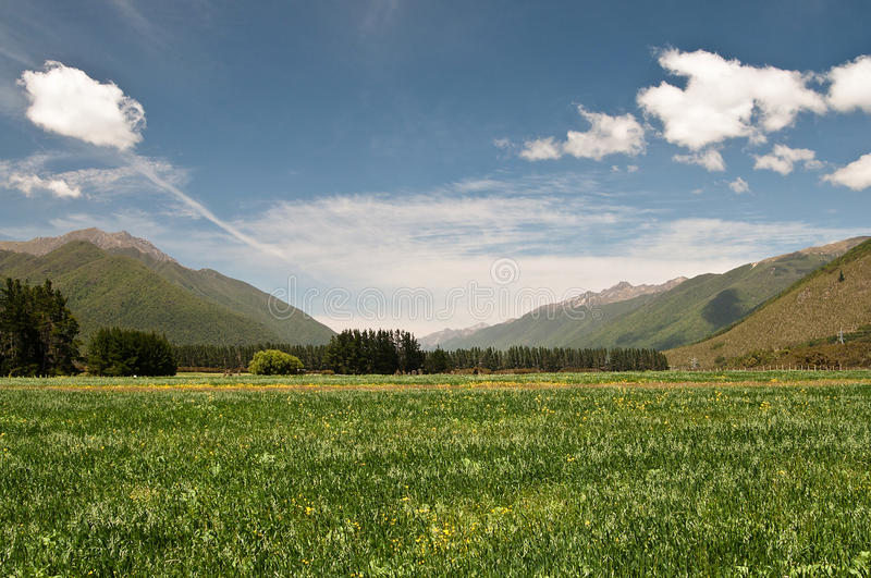 Download Meadow At Wairau Valley Stock Photos - Image: 22364553