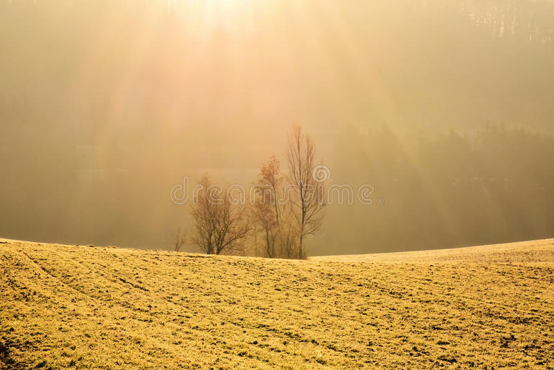 Meadow warmed by sunrays stock image