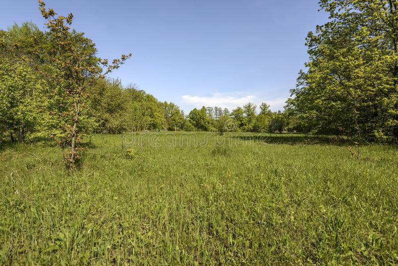 The meadow was cleared of water and dressed with a luxuriant carpet of plants. Spring mood in the forest, impassable roads after the flood of the river, young royalty free stock image