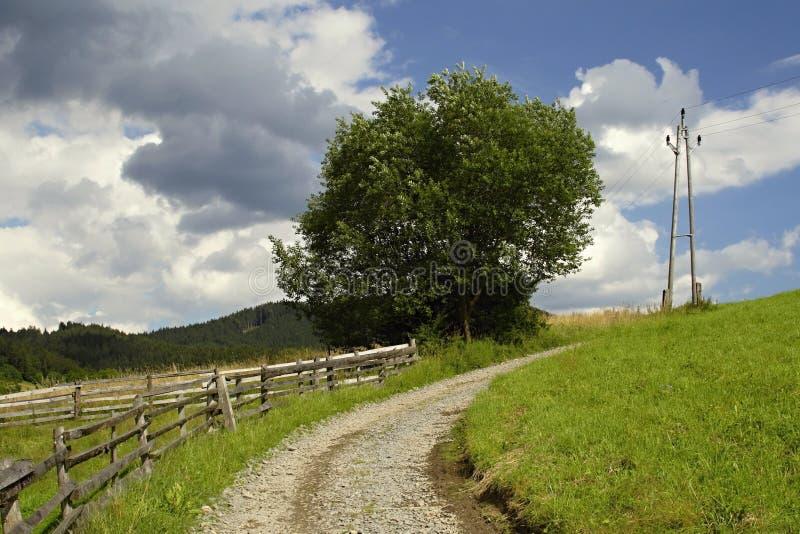 Download Meadow way stock photo. Image of green, nature, season - 36670274