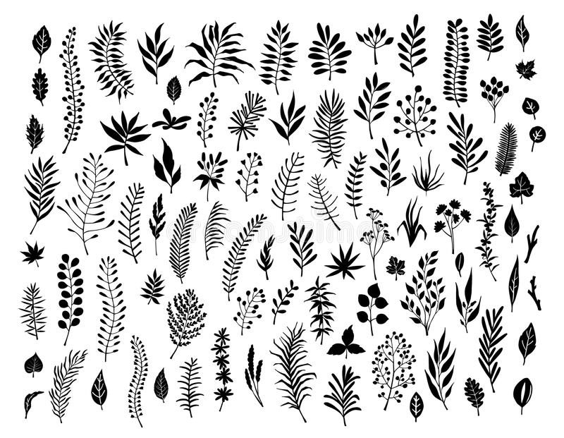 Meadow wild herbs, floral twigs branches silhouettes set. Meadow wild herbs, floral twigs branches set silhouettes collection vector illustration