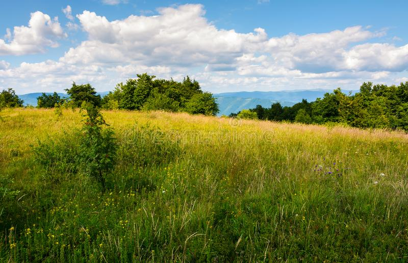 Meadow with wild herbs on top of a hill in summer stock photos
