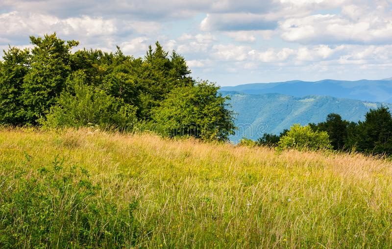 Meadow with wild herbs on top of a hill in summer royalty free stock photos