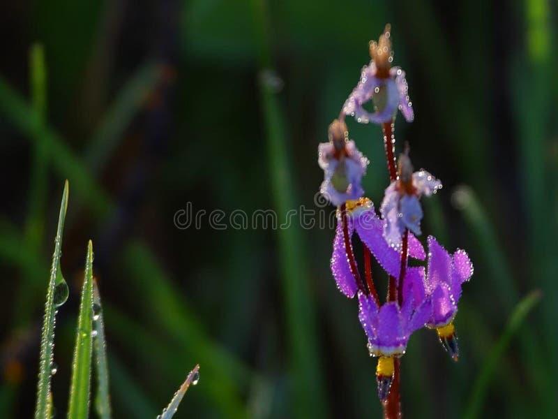 Meadow Wildflowers stock image
