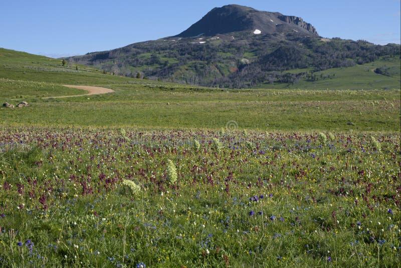 Meadow of Wildflowers below Black Butte Mountain royalty free stock photos