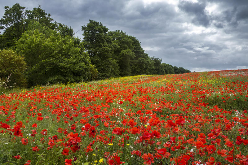Meadow of Wildflowers - Yorkshire - England stock images