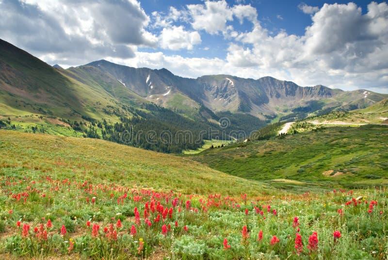 meadow wysokogórska obraz royalty free
