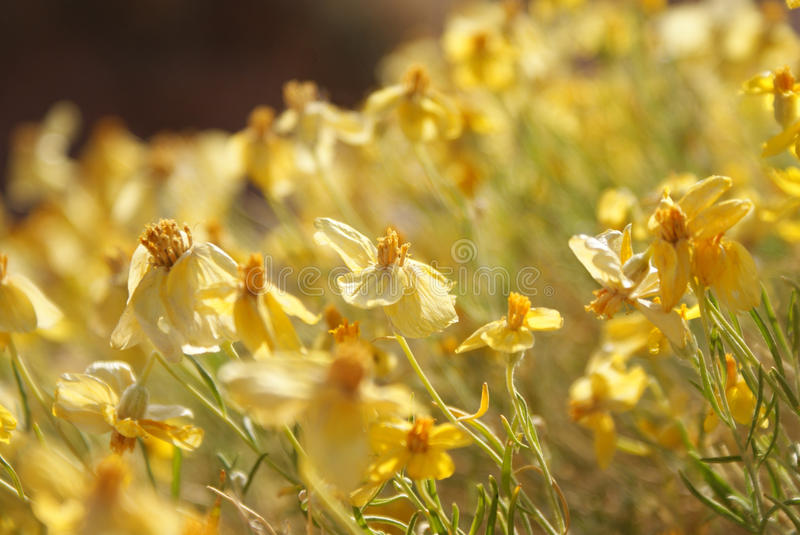 Meadow of Yellow stock photography