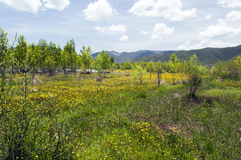 Download Meadow Of Yellow Wildflowers Stock Photography - Image: 31301282
