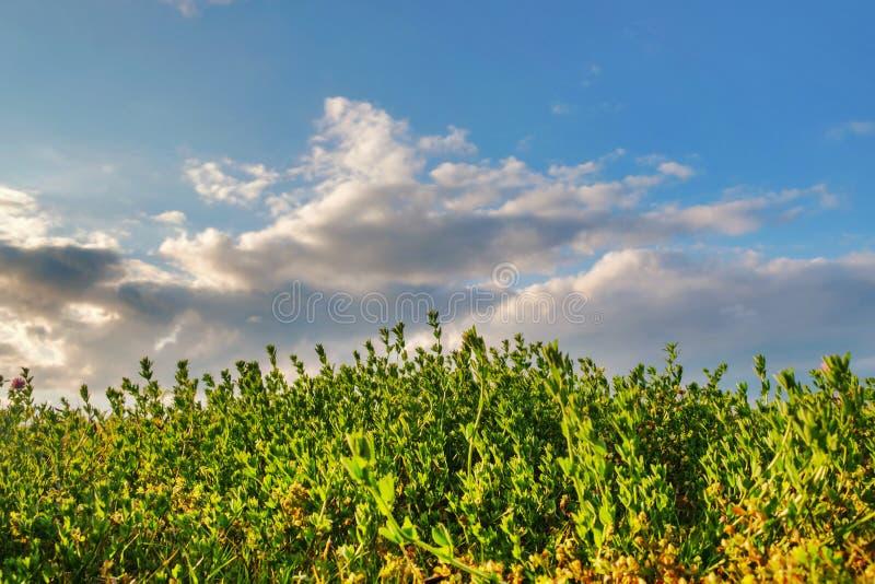 meadow zachmurzone niebo niebieskie fotografia royalty free