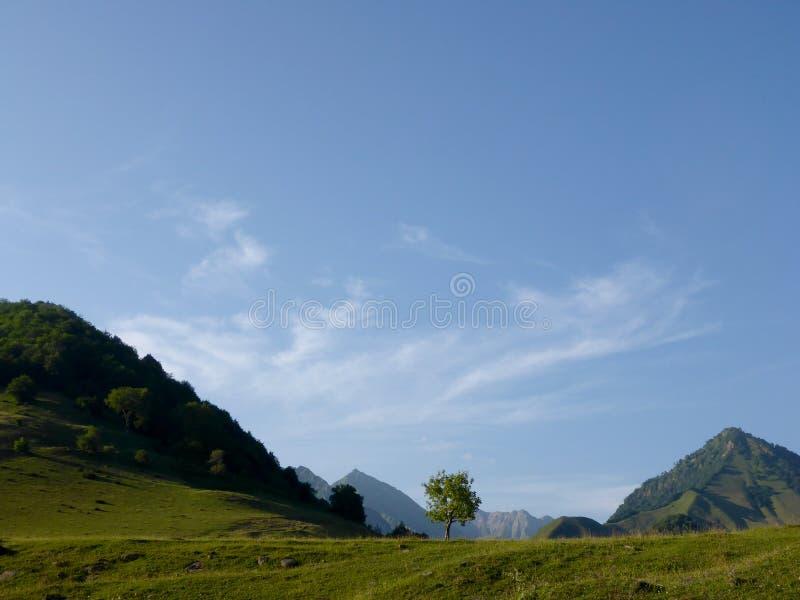 Meadowin berg, Georgia royaltyfri foto