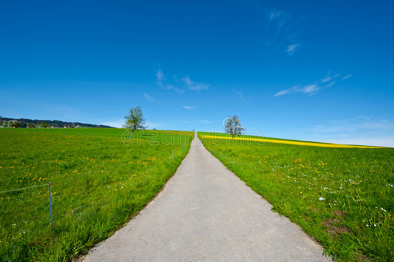 Download Meadows stock photo. Image of europe, nature, livestock - 26987604