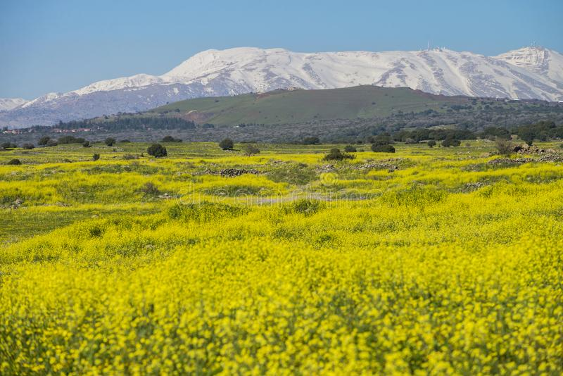 Meadows in golan Heights and hermon mount on the backgound. Meadows in Golan Heights with hermon mount on the backgound, Early Spring israel stock photography