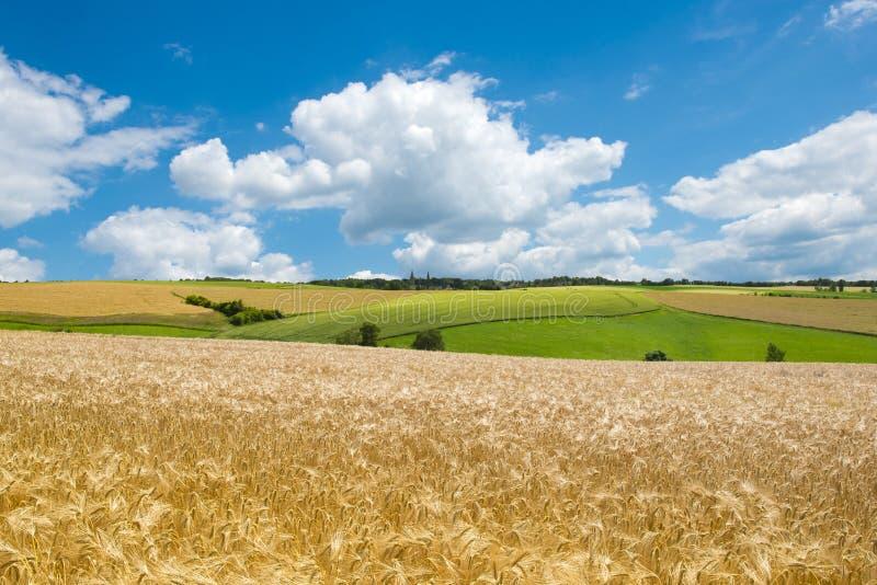 meadows halne odpowiada tło obrazy stock