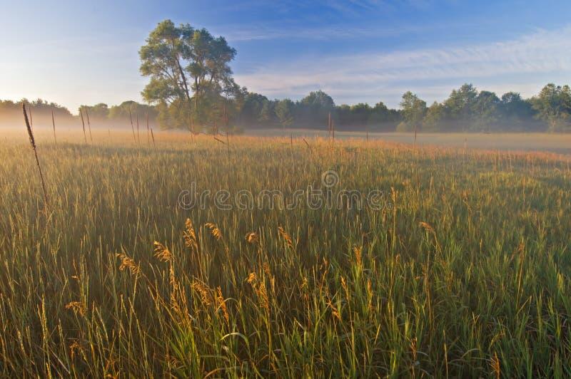 - meadows sabo mgły fotografia stock