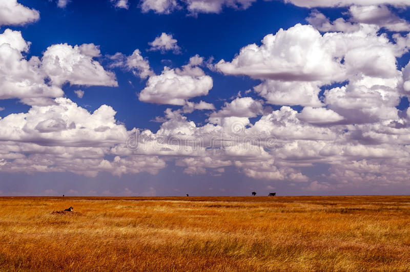 Meadows serengeti. With clouds in the sky royalty free stock images