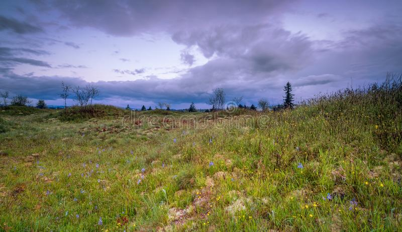 Meadows in Spring. Meadows under the clouds in Washington State royalty free stock photo
