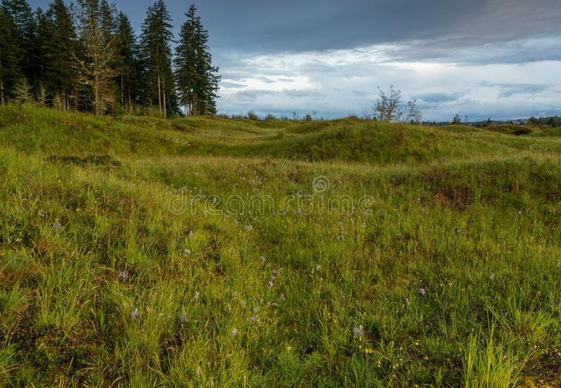 Meadows in Spring. Meadows under the clouds in Washington State stock photo