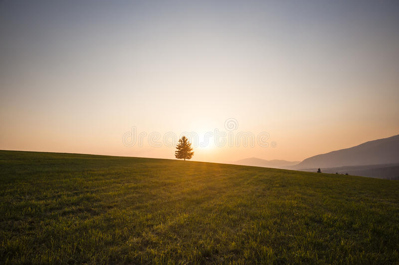 Meadows In Sunset Royalty Free Stock Image