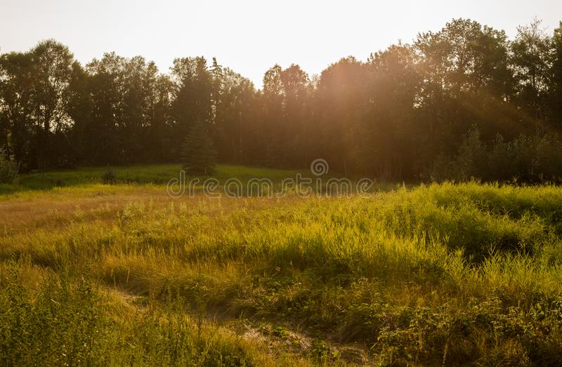 Meadows at Sunset. Calming green meadows at sunset on a summer walk royalty free stock images