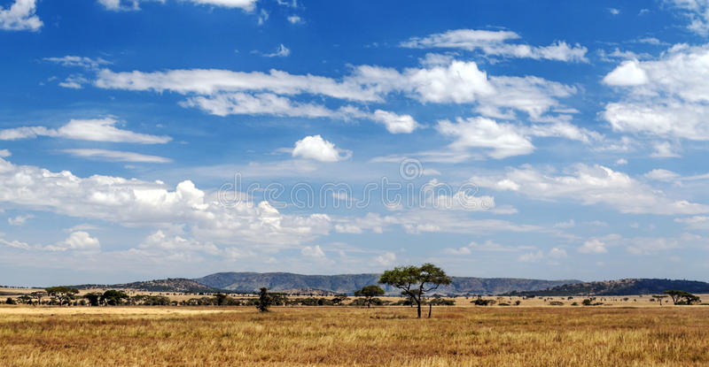 Meadows in Tanzania. With mountains in the background and a cloud in the blue sky royalty free stock photography