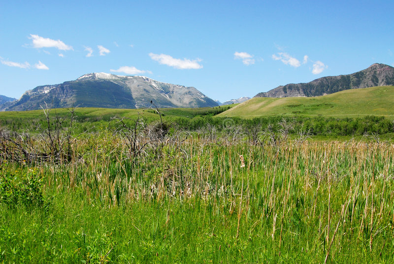 Meadows to mountains. Meadows, forests and mountain in waterton lakes national park, alberta, canada stock photography