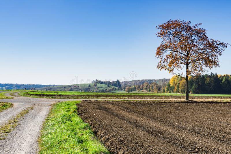 Autumn landscape along Romantic Road, Buchdorf, Germany. Meadows, tree with brown leaves and road in Burchdorf, Germany, Europe. Blue sky and space for text stock photography