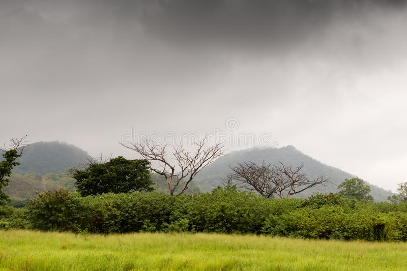 Meadows and trees in the rain forest. With cloudy sky over the mountain background royalty free stock image