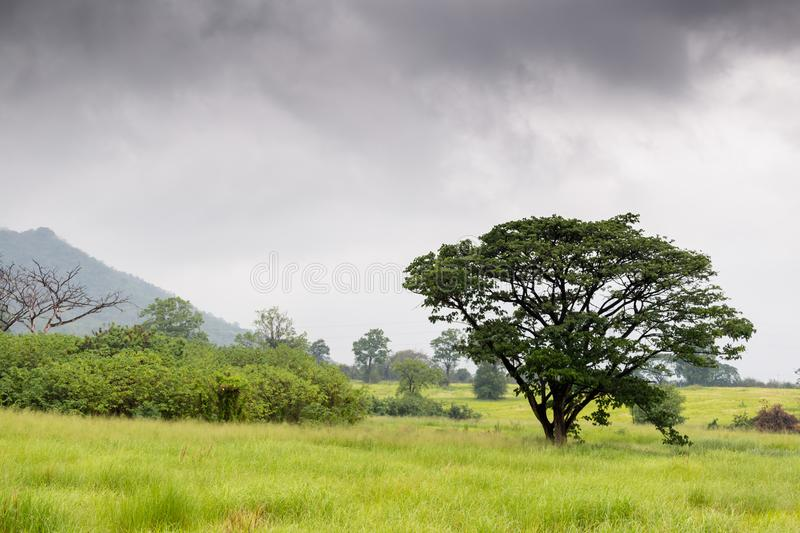 Meadows and trees in the rain forest. With cloudy sky over the mountain background royalty free stock images