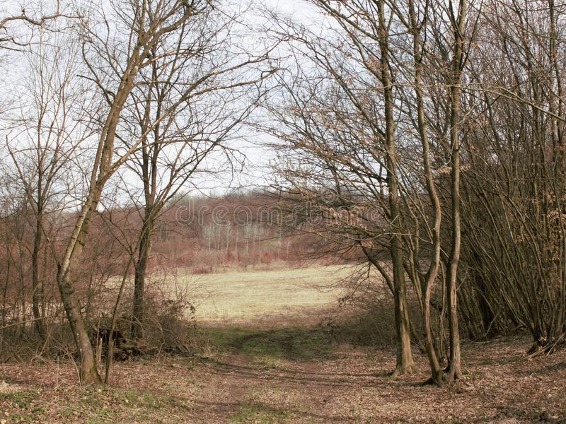 Meadows and woods. Meadows andwoods across the fence in the early spring royalty free stock images