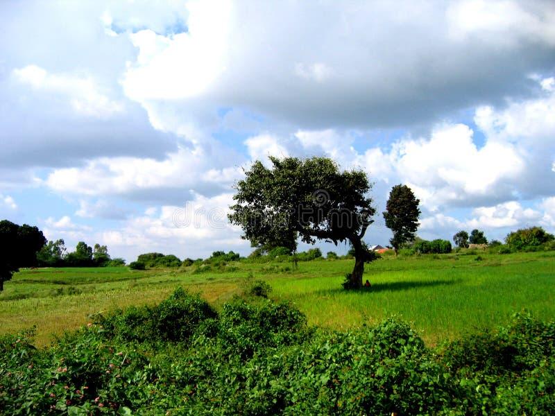 meadowscape стоковое изображение rf