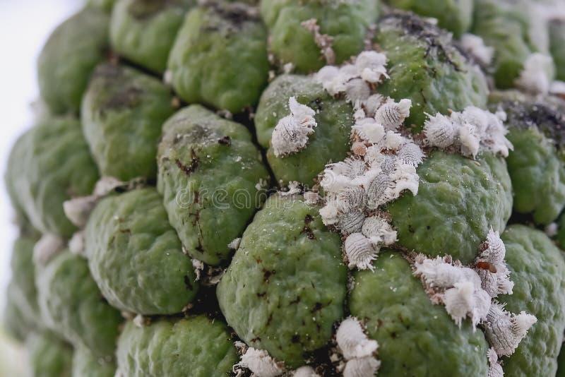 Flour moths royalty free stock image
