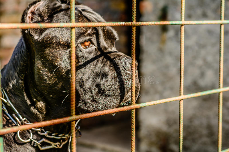 Mean dog looking through the fance stock photos