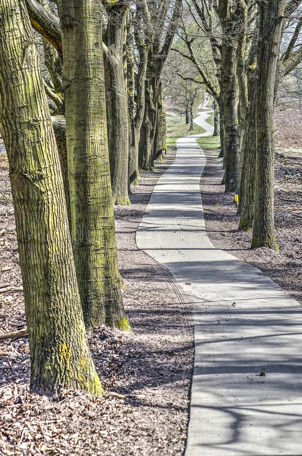 Long and winding road. A meandering concrete path line with trees at the heath near Heerde, The Netherlands stock image