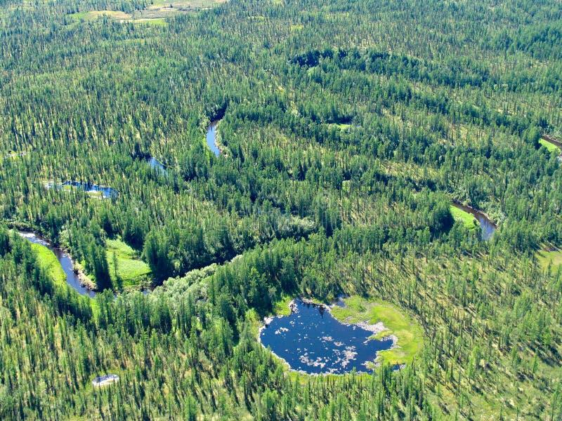 meandering siberian tajgi river obraz royalty free