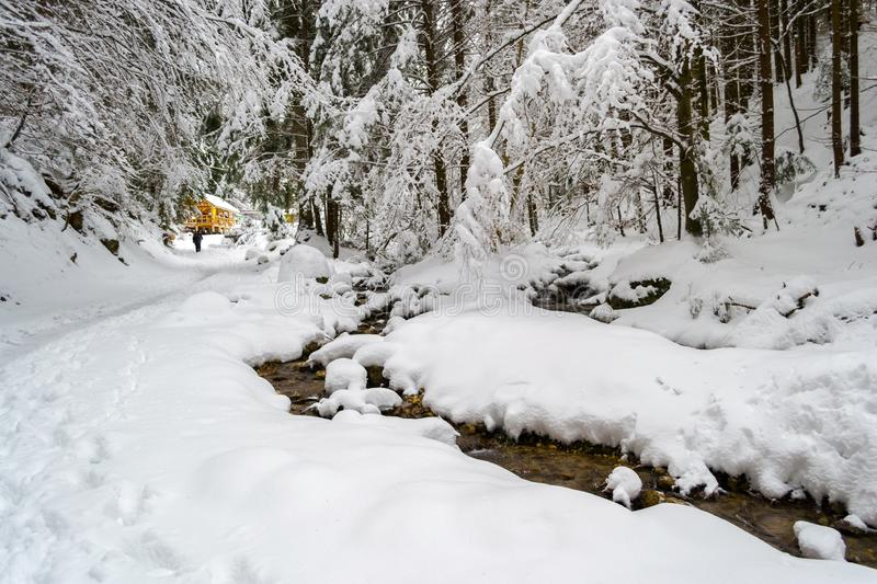 Meandering stream with deep snow banks, passing under white fir trees, towards a warm, wooden, mountain hut, in a forest royalty free stock images