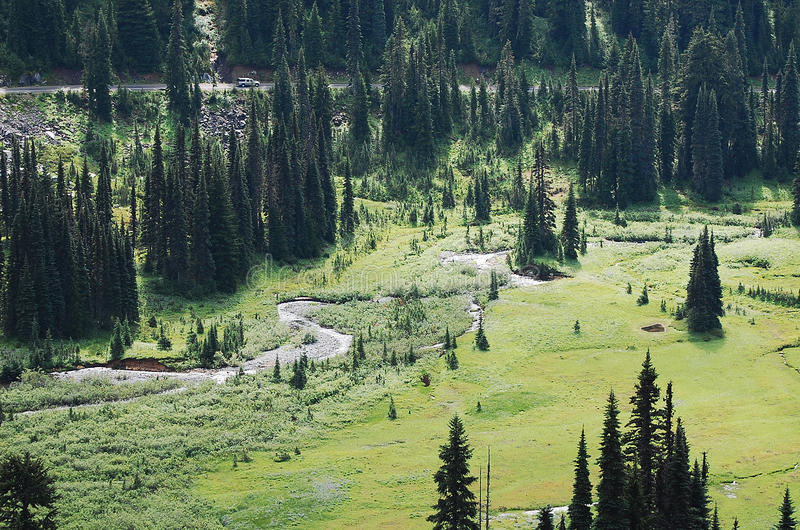 Meandering stream in a meadow. Surrounded by pine trees stock images
