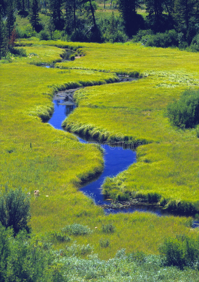 Free Meandering Stream Through A Meadow Royalty Free Stock Photos - 58828