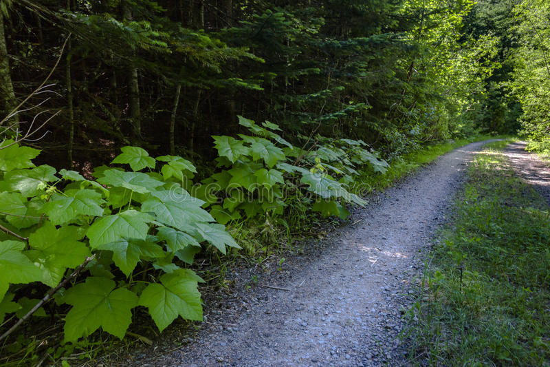 Meandri della strada non asfaltata e di un percorso d'escursione lungo un prato della montagna dentro immagini stock libere da diritti