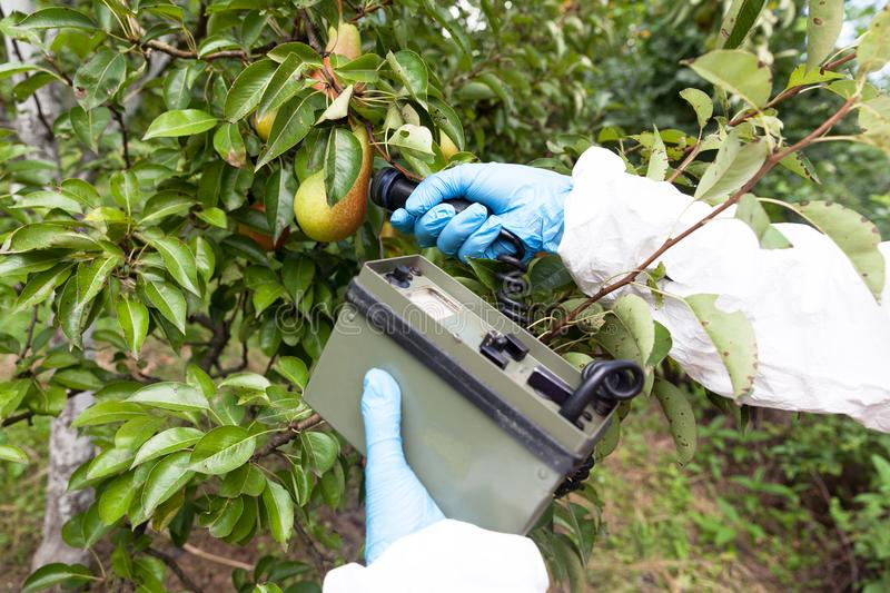Measuring radiation levels of the fruit. With Geiger counter after nuclear accident or incident royalty free stock photos