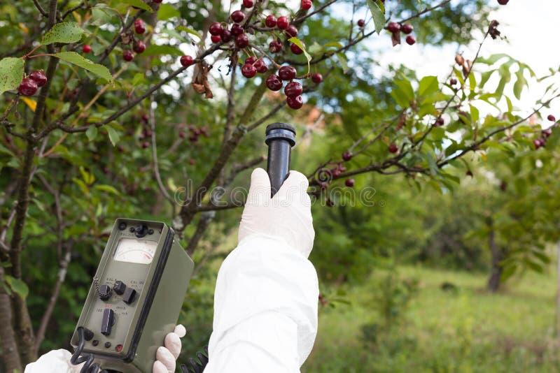 Measuring radiation levels of fruits royalty free stock photo