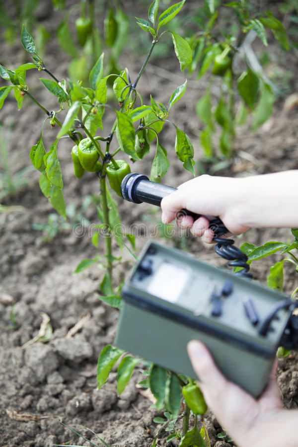 Measuring radiation levels of green peppers stock photos