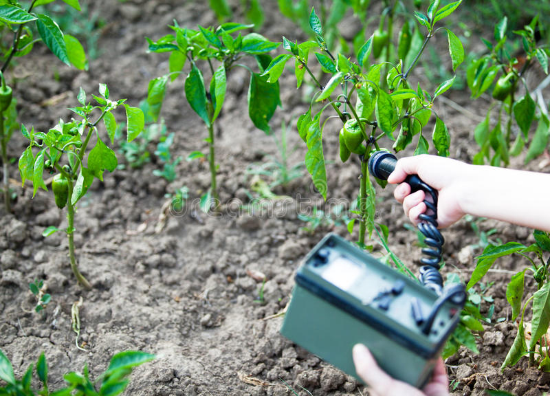 Measuring radiation levels of green peppers stock images
